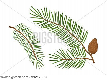 Christmas Tree Vector Branches, Fir And Pine Cones, Evergreen Set, Holiday Decoration, Winter Symbol