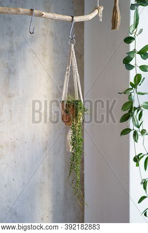 Handmade Cotton Macrame Plant Hanger Hanging From Wood Branch Over Grey Wall At Home. Love Of Housep