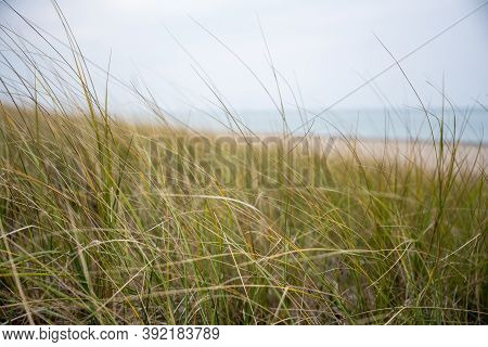 Green Grasses And Lake Michigan In Indiana Dunes