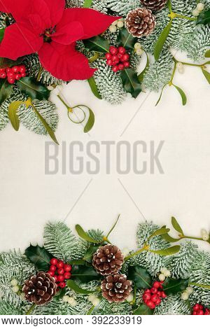 Poinsettia flower background border with winter greenery of holly, snow covered spruce fir, mistletoe & pine cones on parchment paper. Festive background for Thanksgiving & Christmas. Copy space.