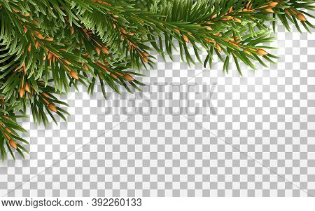 Frame Made Of Branches Of Evergreen Spruce. For Christmas Decoration And Greeting Card Design. Isola