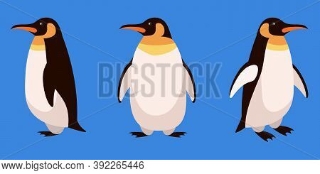 Penguin In Different Angles. Arctic Animal In Cartoon Style.