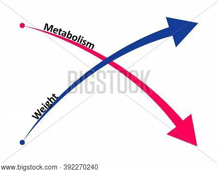 Slow Down Metabolism And Weight Gain. The Ratio Of Metabolism To Weight Gain.