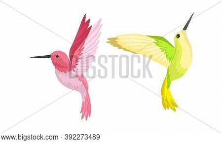 Hummingbirds As Small Bird With Beating Wings And Bright Plumage Vector Set
