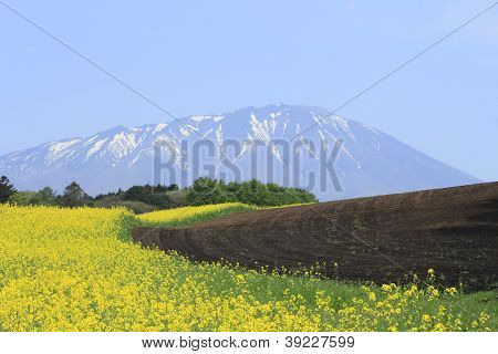 Rape Field, Canola Crops  And Mt.iwate