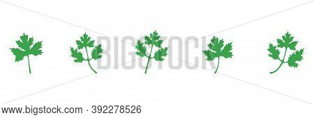Coriander Green Icon Set. Parsley Leaves Vector Illustration Isolated On White. Cilantro Symbol Coll