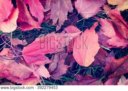 Background With Autumn Season Colorful Natural Leaves