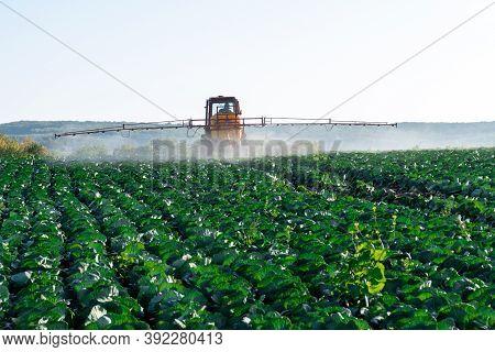 Pesticide Sprayer Tractor Field Farmer Vegetables Cabbage Harvest Greens