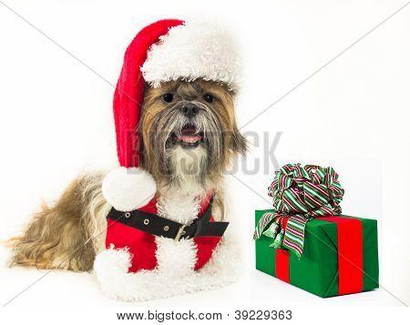 Santa Dog With A Present