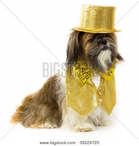 Dog In A Gold Party Costume