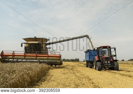 Combine Harvester Agriculture Machine Harvesting Golden Ripe Wheat Field. Harvester Combine Harvesti