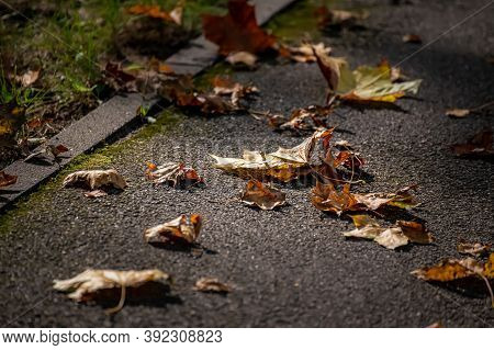 Yellow And Brown Fallen Leaves Of Trees Lie On The Asphalt. Autumn Textured Background.