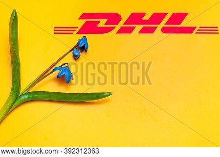 Blue Spring Flowers On An Yellow Postal Envelope With Dhl Logo. Fresh Flowers Scilla Siberica As A S