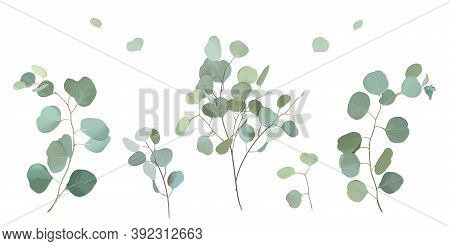 Silver Dollar Eucalyptus Selection Branches Vector Design Set. Wedding Greenery. Mint, Blue, Green T