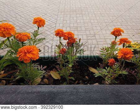 Hanging Flowerbed With Orange Flowers In The Park