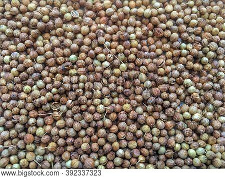 Coriander Seed, Coriandrum Sativum, Many Seeds Closeup Detail, Macro, Common Aromatic , Dried Corian