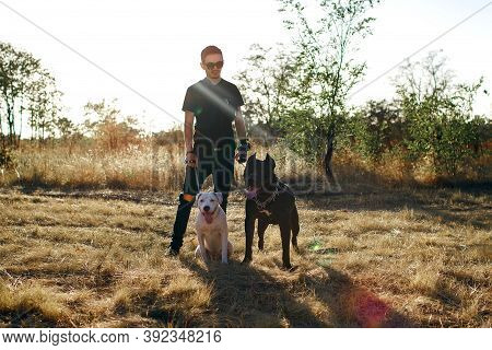 Stylish Man Walking His Dogs. Staff Terrier And Pit Bull Obey The Owner While Walking In The Park. F