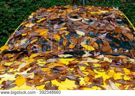 Autumn Leaves On Frontal Car Standing On The Street Season