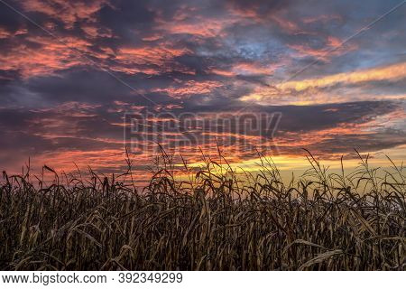A Dramatic And Colorful Sunset Sky With Dramatic Clouds Tops An Autumn Cornfield Before Fall Harvest