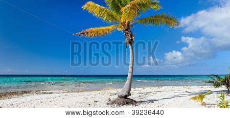 Panoramic photo of a palm tree on exotic beach