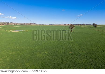 Aerial View Of Rural Farmland Near Cowra In The Central West Of Nsw Australia. Recent Rainfall Ensur