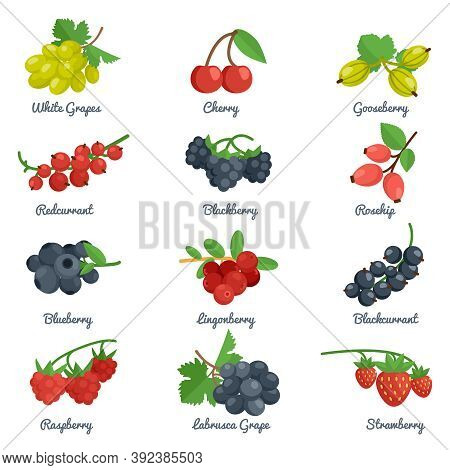 Berries Flat Icons Set With Grape Cherry Gooseberry Blackberry Isolated Vector Illustration