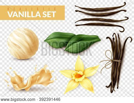 Vanilla Realistic Set With Ice Cream Scoop Shake Splash Flower Dried Beans Leaves Transparent Backgr