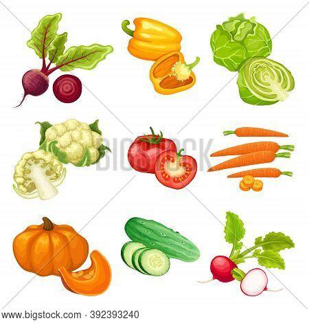 Cartoon Organic Vegetables Set With Beet Pepper Cabbage Cauliflower Tomato Carrot Pumpkin Cucumber R
