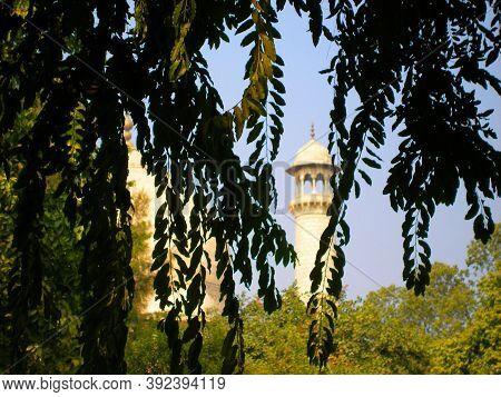 Defocus Black Silhouettes Of Branches Of Leaves And Taj Mahal Minaret