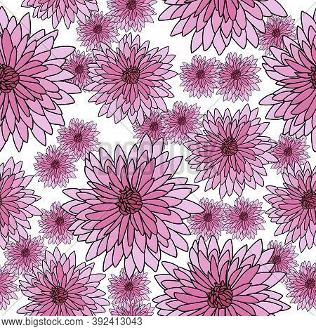Seamless Pattern Of Pink Chrysanthemums On A White Background, Bright Blooming With Many Small Petal