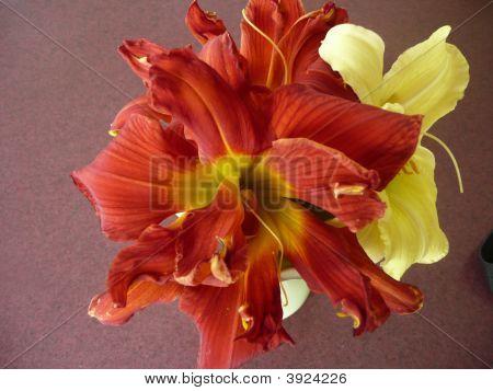 Burnt Orange & Yellow Daylilies