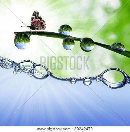 dew drops with butterfly above the water level poster