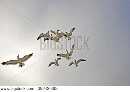 Gulls In Namibia Gulls In Namibia Gulls In Namibia