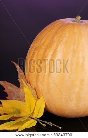 Ripe orange pumpkin with yellow autumn leaves on purple background close-up