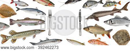 School Of Various Fish Float Right Into The Plate. Fish Isolated Collection. Shop Fish Restaurant