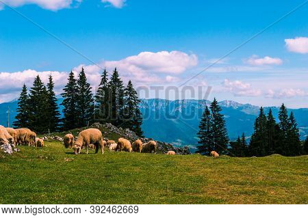 A Herd Of Sheep In A Beautiful Mountain Landscape