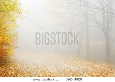 Abstract Autumn landscape