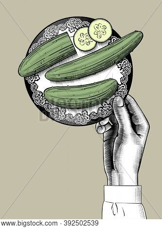 Female hand holding a plate with green cucumbers. Vintage engraving stylized drawing