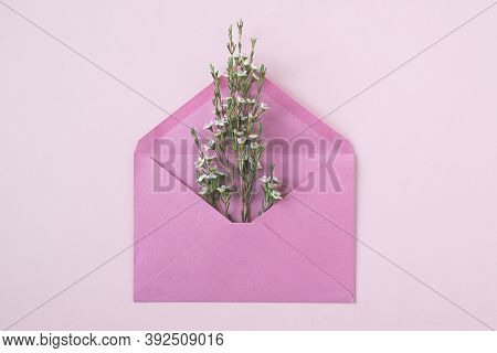 Top View Closeup Of White Delicate Flowers In Bloom Bursting Out Of An Open Vintage Pink Paper Envel