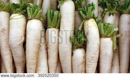 Fresh Daikon Radish. Daikon Root Plant. Fresh Vegetables, Natural Products.