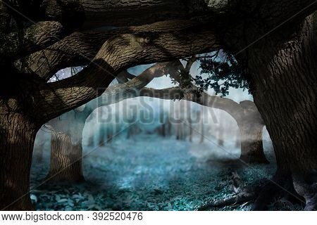 Fantasy World. Arch Of Old Tree Branches In Enchanted Foggy Forest
