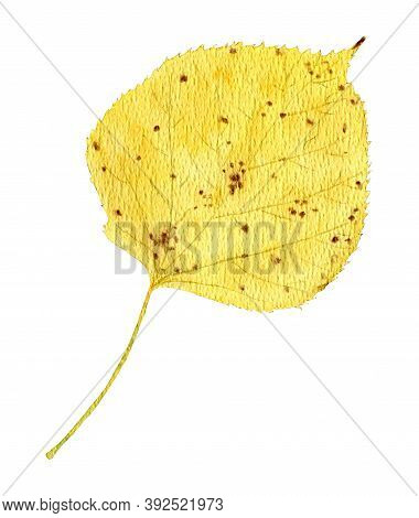 Autumnal Linden Leaf, Watercolor Yellowed Linden Leaf With Dots.isolated On White Background, Autumn
