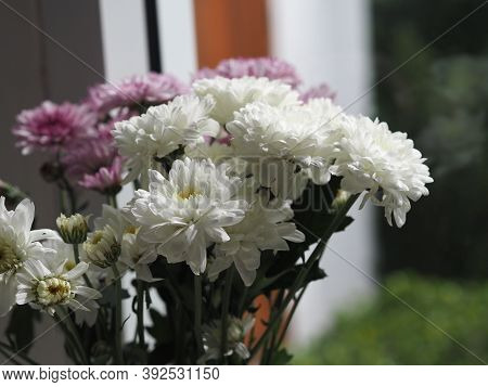 Violet And White Gerbera, Barberton Daisy Flower Beautiful Bouquet In Water Glass Colorful Beautiful