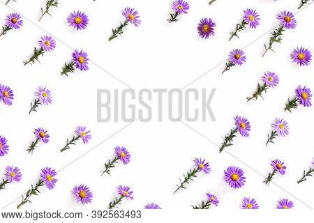 Flowers Wild Violet Asters With Dew On A White Background With Space For Text. Top View, Flat Lay. A