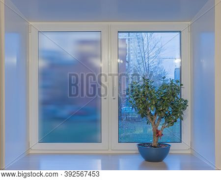 On The Window Sill, In A Blue Flower Pot, There Is A Tolstyanka Tree, A Genus Of Succulents Of The T