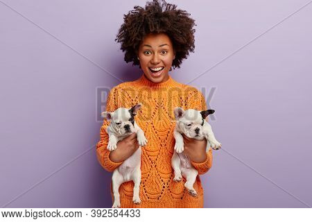 Love Between Owner And Animals. Positive Dark Skinned Woman Holds Two Funny French Dog Puppies With