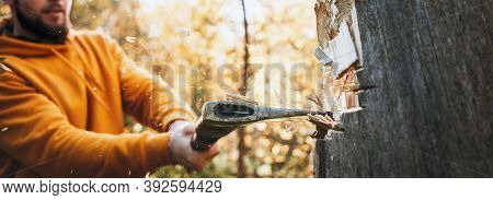 Woodcutter Chopping A Big Tree, Chips Fly Apart. Wide Image