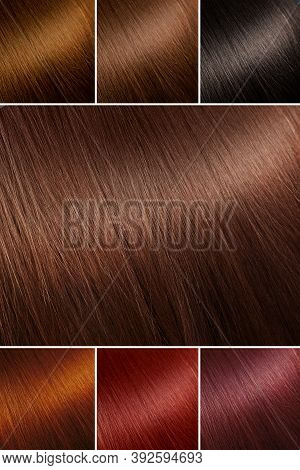 Color Chart For Tints. Hair Color Palette With A Wide Range Of Swatches. Example Of Different Hair C