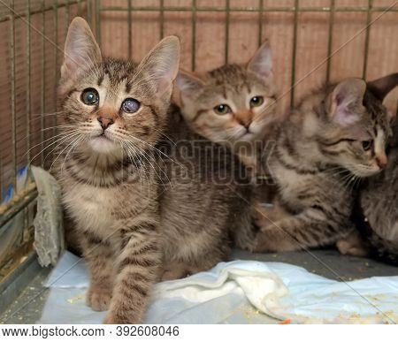Homeless Kittens In A Cage In A Shelter