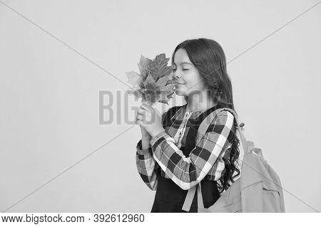 As Beautiful As Autumn. Little Schoolchild Hold Fall Leaves. Small Girl Enjoy Autumn Foliage. Celebr